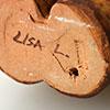 0026 / 底に10mm程の浅いヒビがみられます。